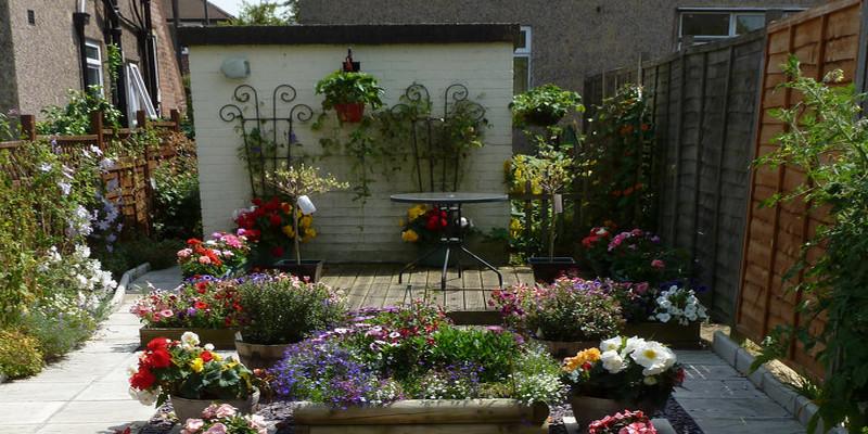 The best way to Grow Brunnera Macrophylla &#3 9; #3 9 & Variegata;